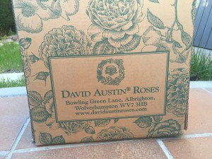 David Austin España