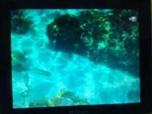 snorkel illes medes