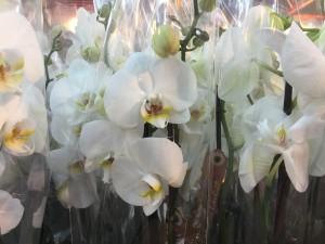 patchwork de orquídeas